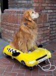 Во Владивостоке появилось такси для животных